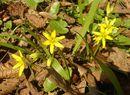 Budząca się do życia przyroda na wiosnę