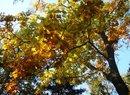 Oblicza prawdziwej złotej polskiej jesieni