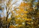 Najpiękniejsze oblicza złotej jesieni w Polsce