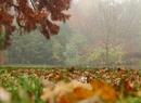 Późna jesień we mgle