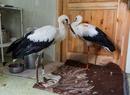 Ptasi szpital w Bukwałdzie