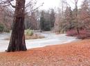 Styczniowa odwilż w parku