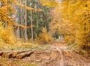 Czar późnej jesieni