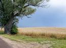 Lato wśród zbóż